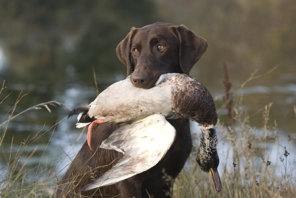 Water fowl hunt
