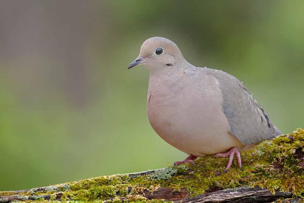 South Zone Dove Season Sign Up